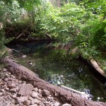 Ecosistema do Rio S. Lourenço