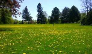 Parque Maisonneuve